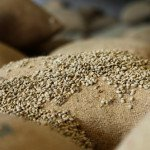 Ethiopia's export commodities and export markets: Coffee, gold and fluctuating prices