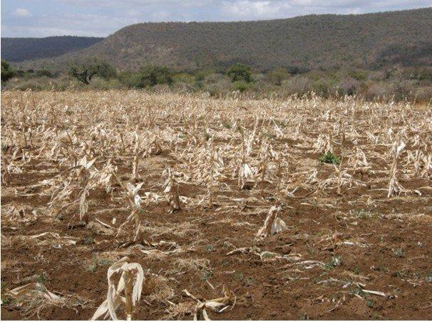 Ethiopia's latest rain failure has mainly hit southern livestock-herding communities