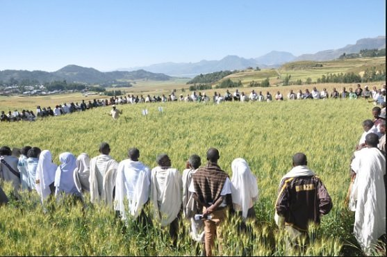 Ethiopia's Tigray Region bags gold award for greening its drylands :Reuters